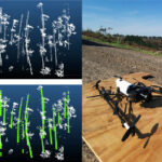 Forestry Robotics